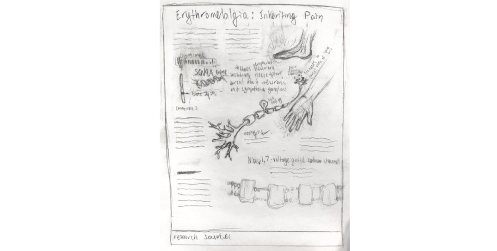 Sketch of an educational poster design and scientific illustration for erythromelalgia