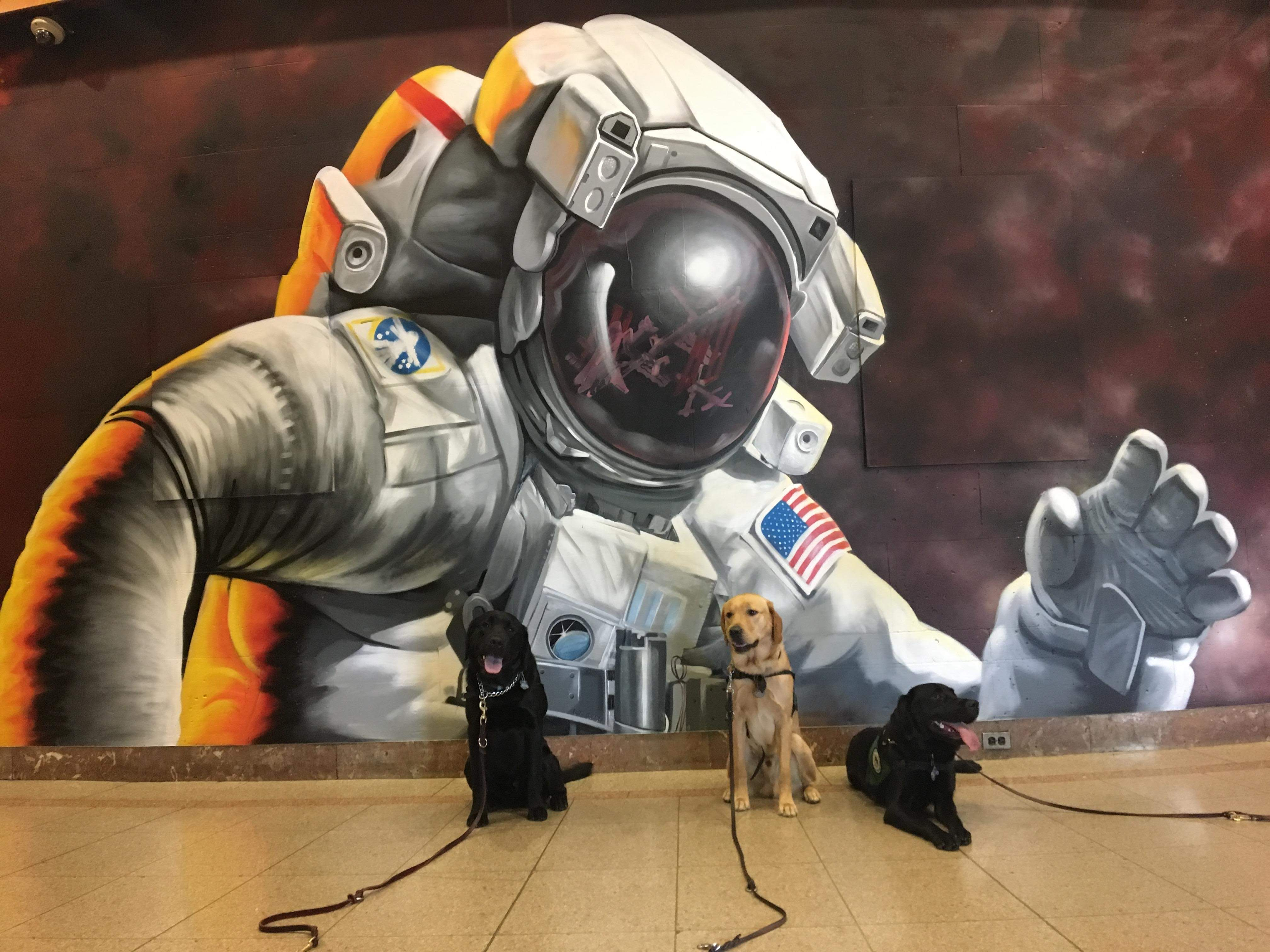 Seeing Eye Dogs in front of space mural