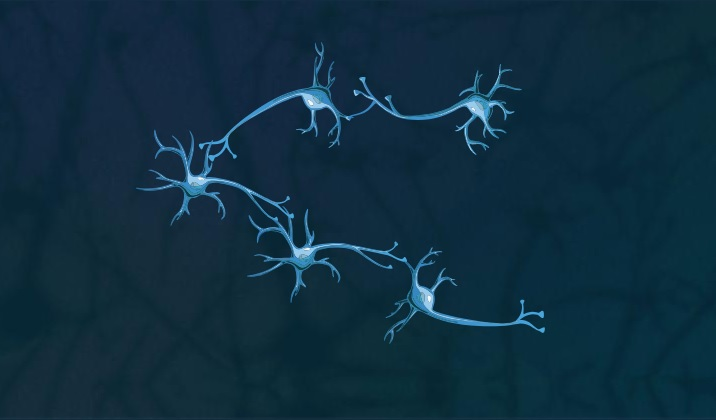 five neurons connected in Build Your Network game