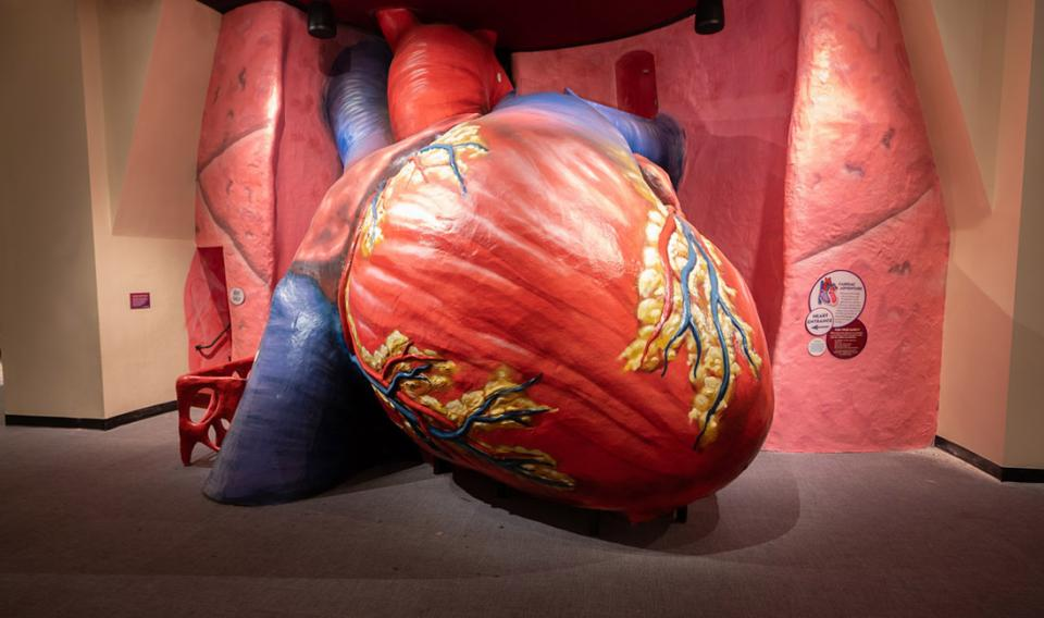 The Franklin Institute's iconic and newly refurbished Giant Heart Exhibit