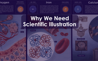 """Title image reading """"Why We Need Scientific Illustration"""" layered over illustrations of the internal human anatomy"""
